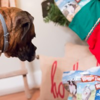 dog-stocking-stuffers-waggin-train-6