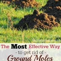 how to get rid of ground moles