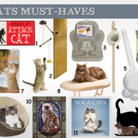 cat must haves