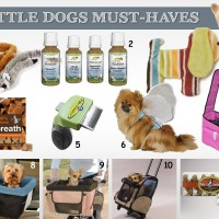 small dog must haves