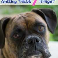 what does my dog need dog owner essentials